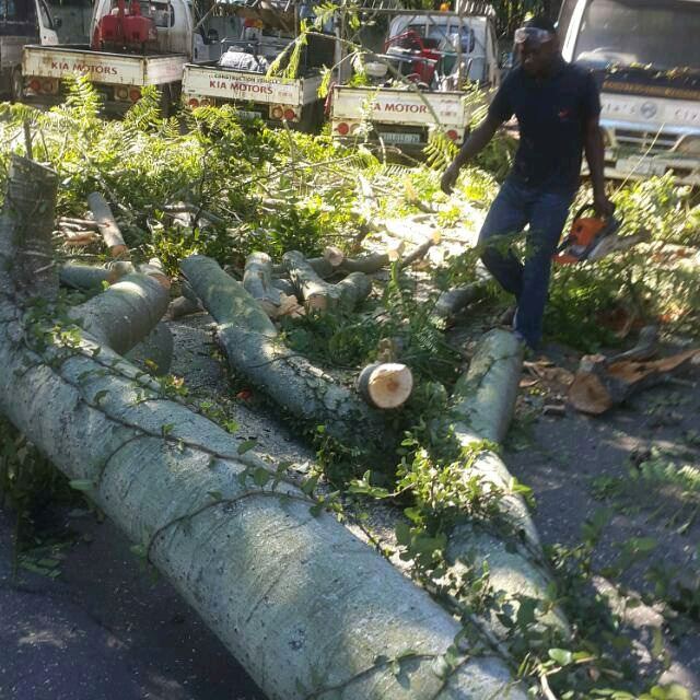 Tree Removal & Tree Cutting